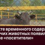 В пункте временного содержания бродячих животных появились первые «посетители»